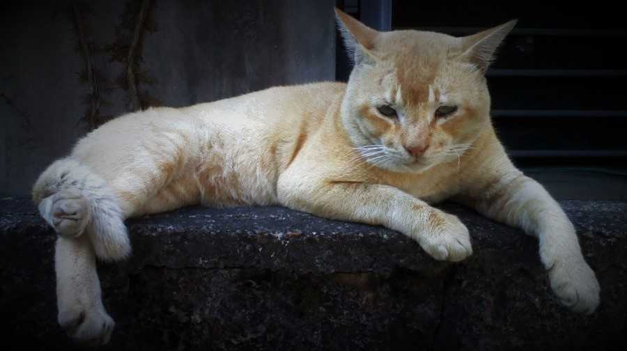 international cat care toxic plants