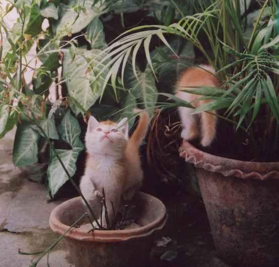 Organic Cat Litter Because The Wrong Litter Can Kill