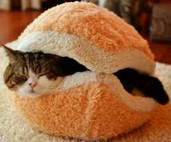 Shell-Dog-Cat-Sleeping-Bed-Bag-Nest