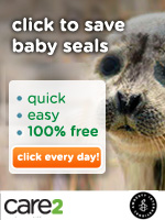 Click to Defend Baby Seals