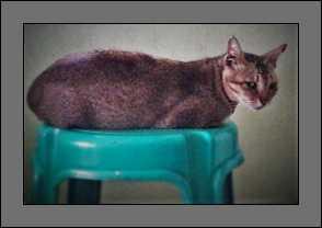 Discover-Cat-Litter